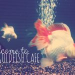 The Goldfish Cafe