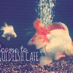The Goldfish Cafe