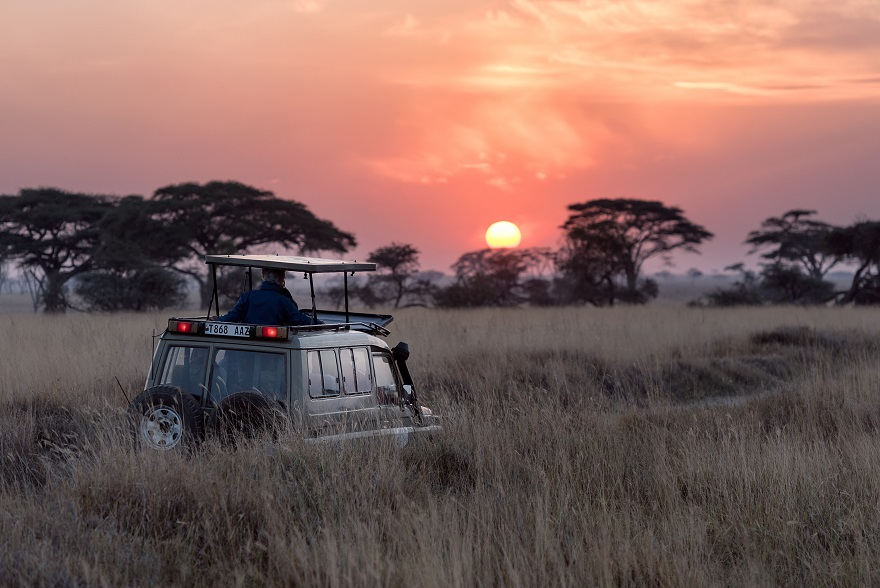 Why Is African Safari So Wildly Popular?